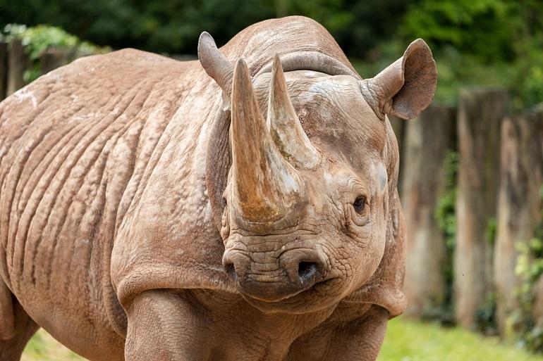 PZ Black Rhino Sita