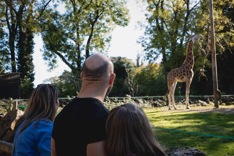 PZ Giraffe Viewing