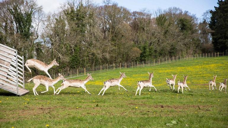 deer park web