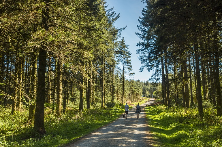 Man and woman Dog Walking on footpath Bellever Forest Phil Hemsley web