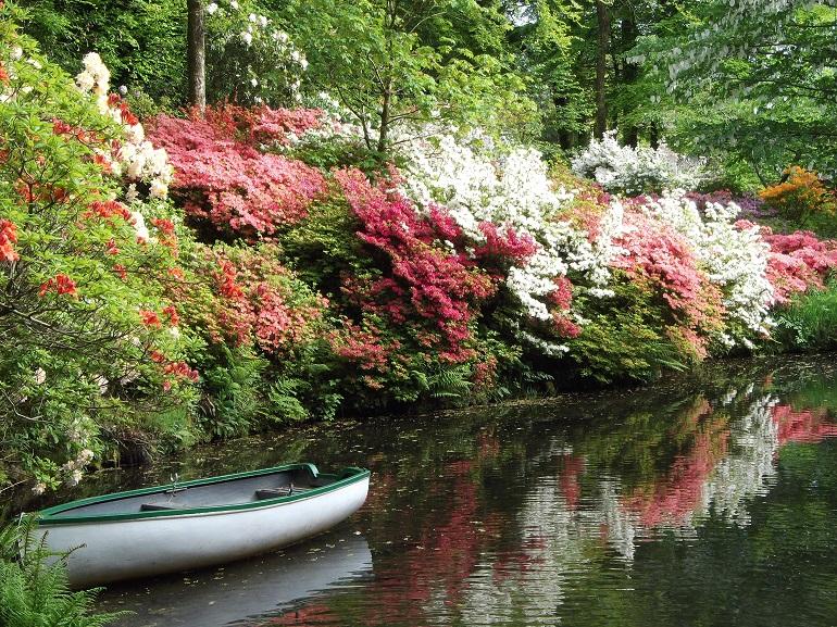 azaleas and boat web