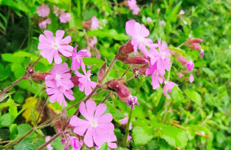 id flowers